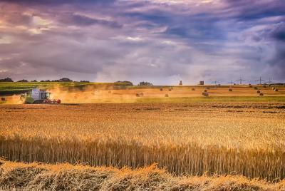 ISMEA - Imprenditoria femminile in agricoltura